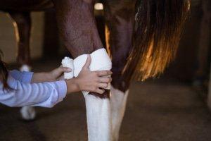 Pflegemittel Pferd
