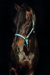 Horseware Field Safe Headcollar Cob Hellblau