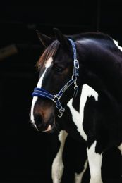 Horseware Rambo Padded Headcollar Pony Navy