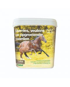 NAF Stuten, Fohlen und wachsende Pferde
