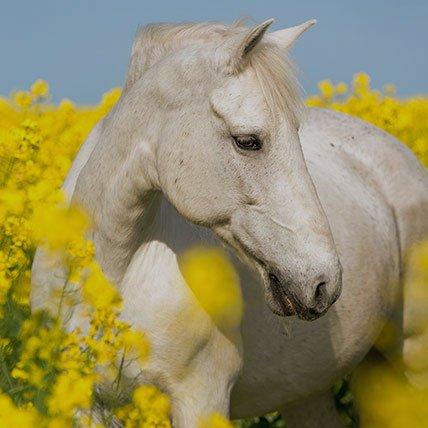 Decken von 165cm (Pferd)