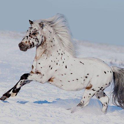 Winterdecken bis 165cm (Shetlandpony)